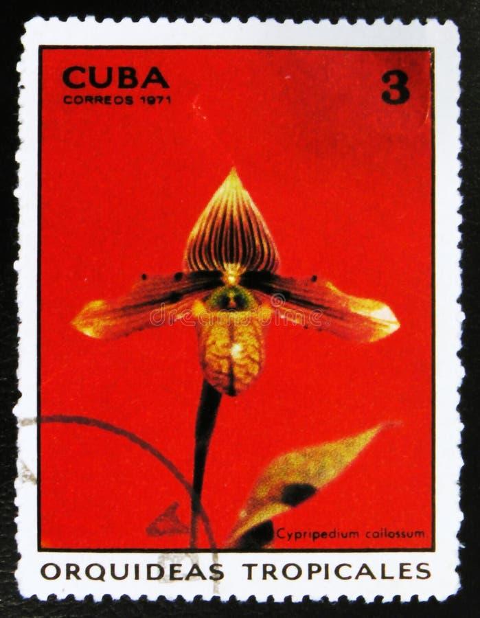 florezca el callosum del Cypripedium, o el callosum del Paphiopedilum, orquídeas tropicales, circa 1971 fotos de archivo