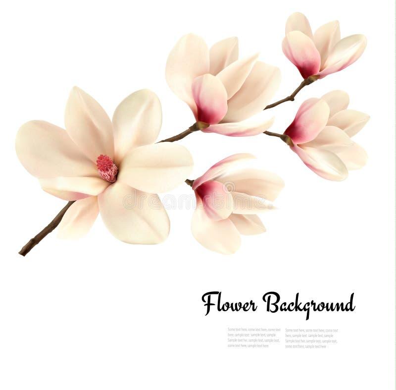Florezca el fondo con la rama del flor de la magnolia blanca ilustración del vector