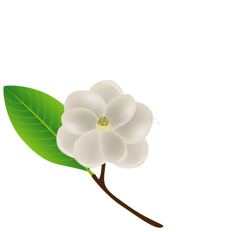 Florezca el fondo con la rama del flor de la magnolia blanca stock de ilustración