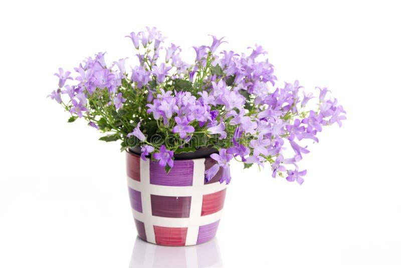 Florezca en crisol de flor fotografía de archivo