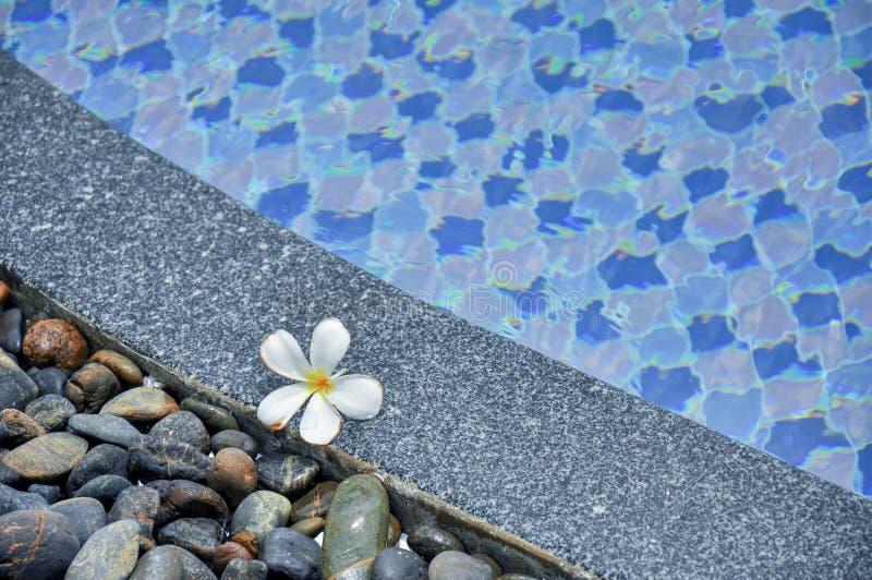 Florezca en piedras en el borde de la piscina imagen de archivo libre de regalías