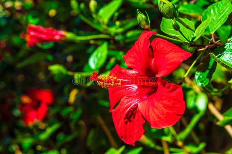 Florezca en un jardín botánico en el canario de Gran imagen de archivo