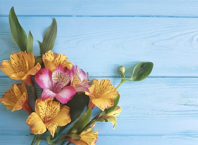 Florezca la belleza floreciente decorativa en un fondo de madera del color, marco del alstroemeria fotografía de archivo libre de regalías