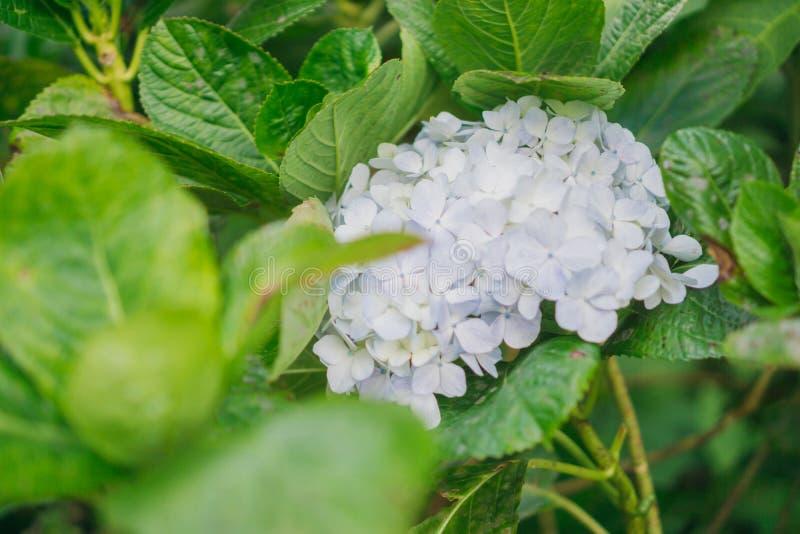 Florezca la magnolia que florece contra un fondo de flores foto de archivo libre de regalías
