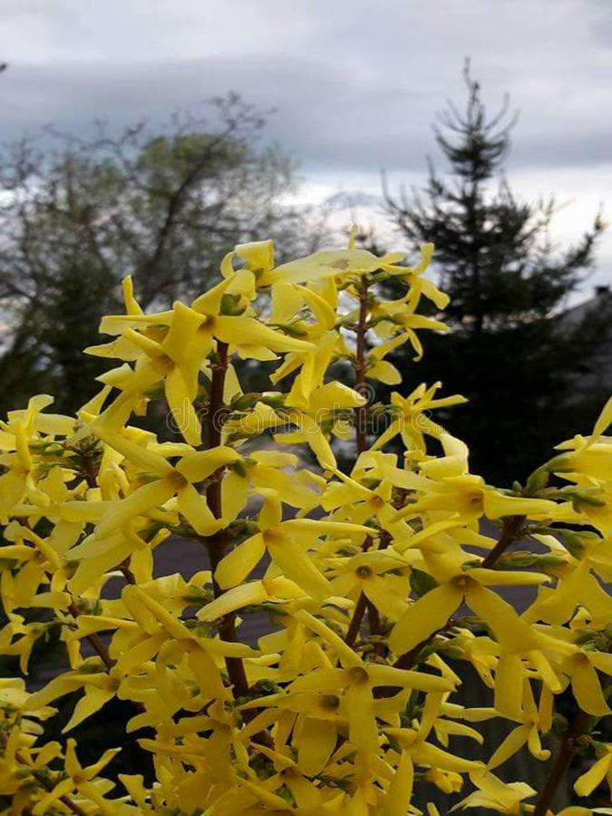 flori fotografia stock