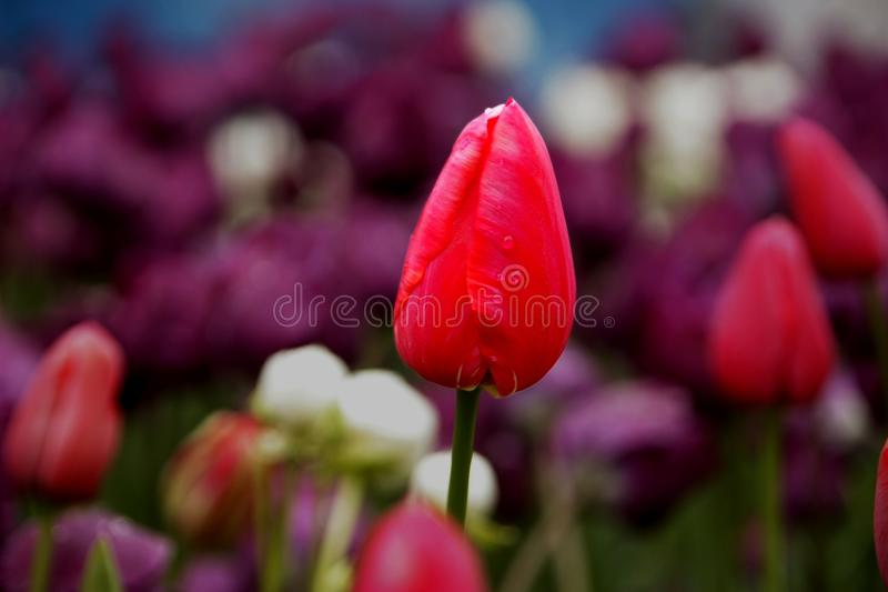 Floriade 2009 Canberra royalty free stock photography