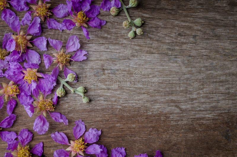 Floribunda Lagerstroemia ή επίσης γνωστός ως ταϊλανδικό myrtle υφάσματος κρεπ στοκ φωτογραφία
