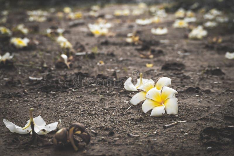 Floricultura sulla via della crepa, fuoco molle, testo in bianco - immagine immagine stock libera da diritti