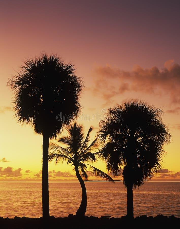 Florida Bay at sunrise royalty free stock photo