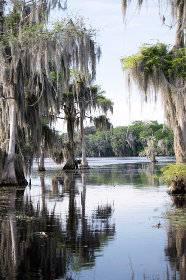Florida Bayou royalty free stock photography