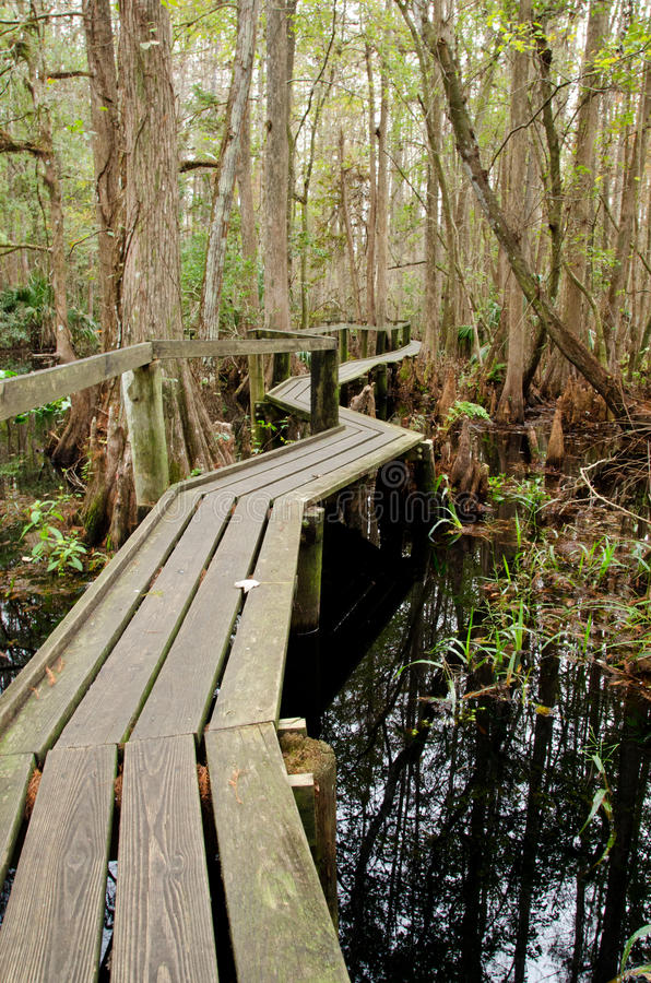 Florida boardwalk trail royalty free stock images