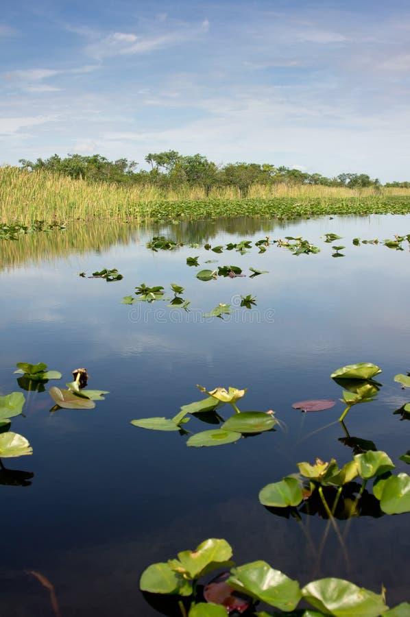 Free Florida Everglades National Park Stock Photos - 26243313
