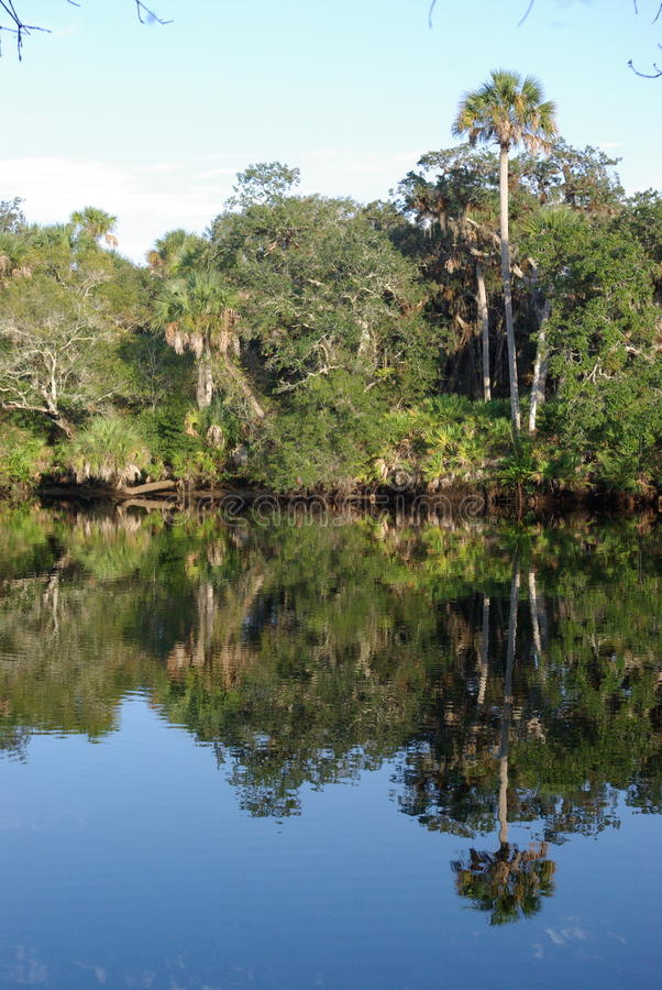 Download Florida Everglades Shoreline Stock Photo - Image: 11897002