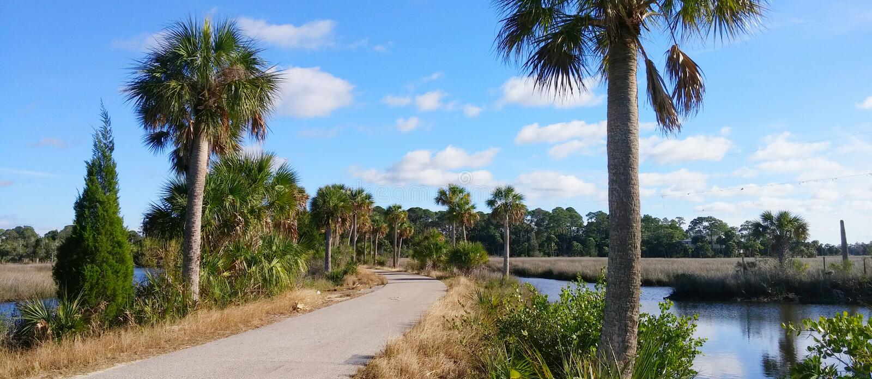 Florida-hernando Strand: Baum stockfotografie