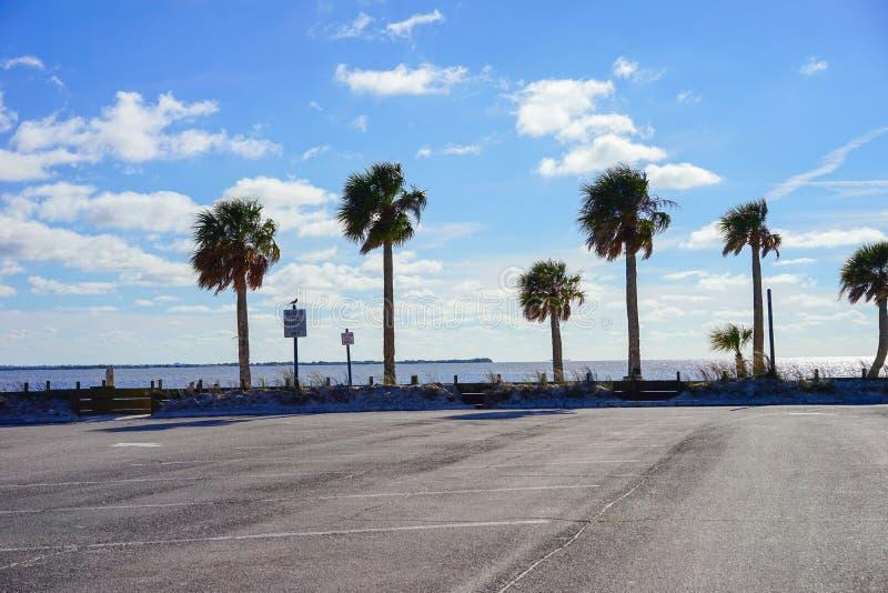 Florida-hernando Strand: Baum lizenzfreies stockbild