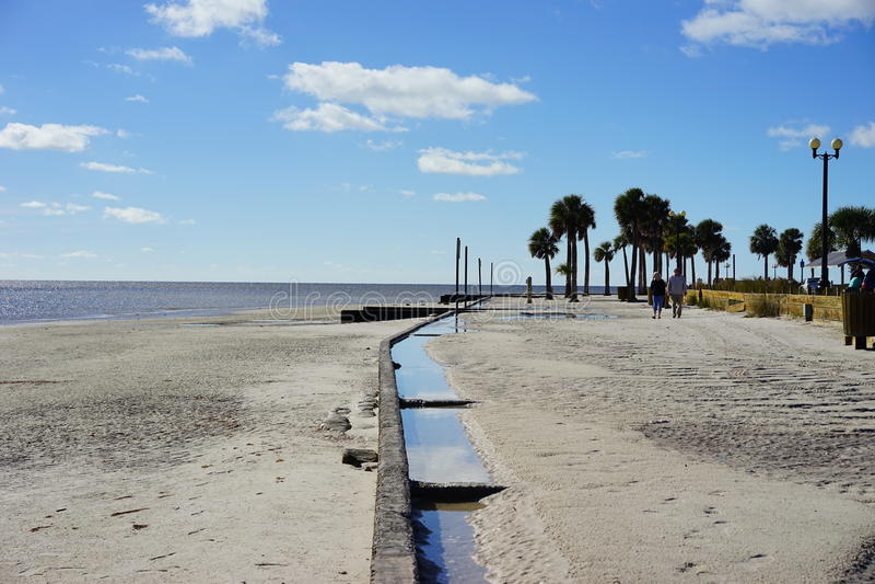 Florida-hernando Strand: Baum stockbilder