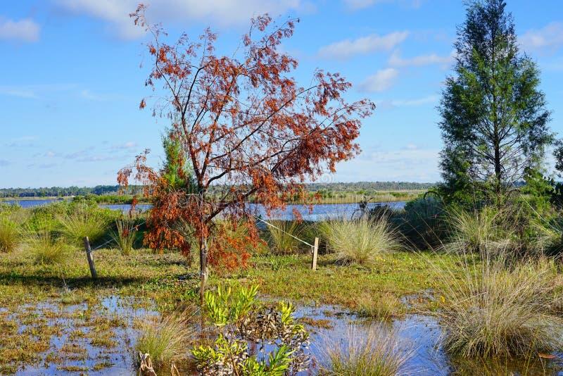 Florida-hernando Strand: Teich lizenzfreie stockfotografie