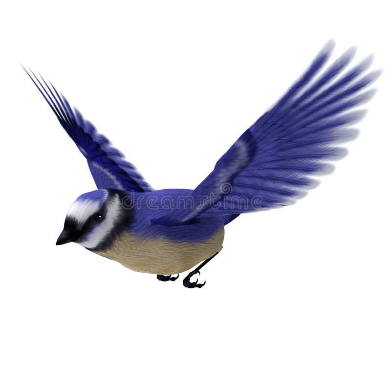 Florida Jay Bird ilustração royalty free