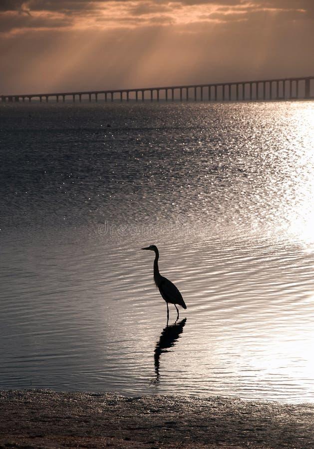 Florida-Küstenlinie stockfoto