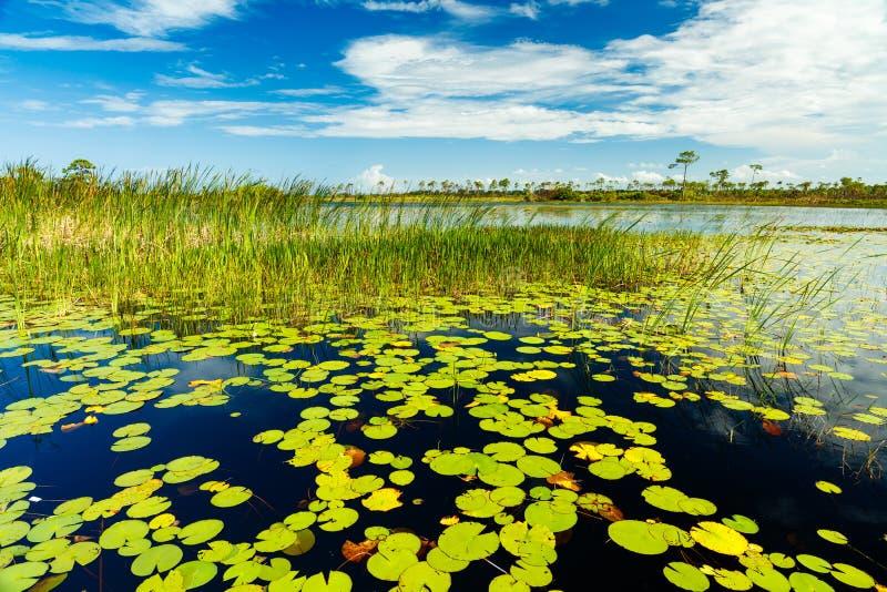 Florida-Landschaftsschutzgebiet stockbilder