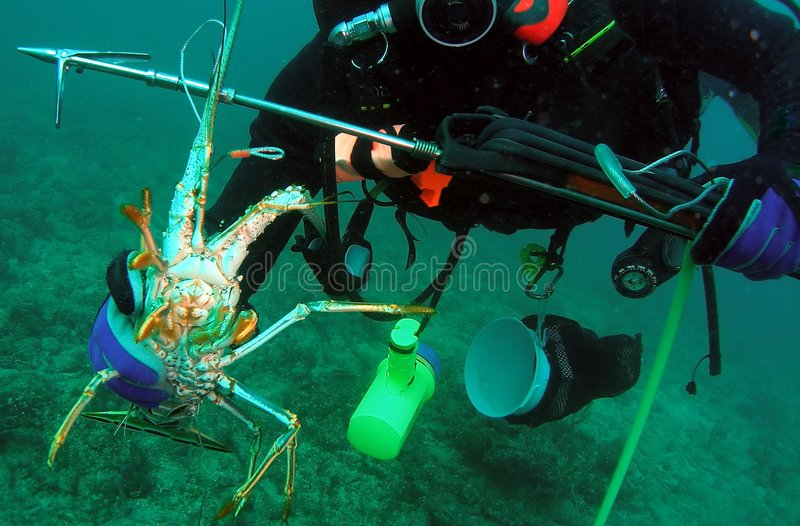 Florida Lobster royalty free stock photography