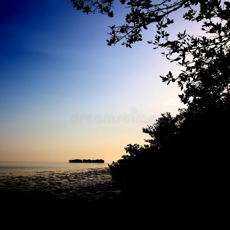 Florida-Mangroven-Sonnenuntergang stockbilder