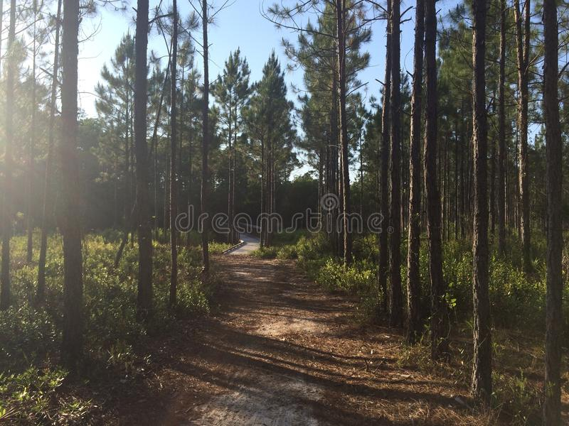 Florida-Naturlehrpfad stockbild