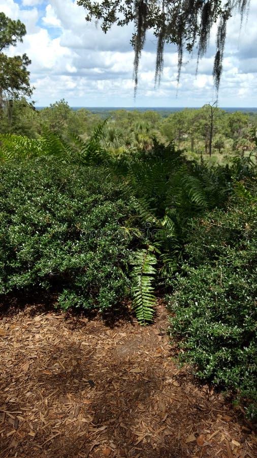 Florida& x27; orange dungar för s som beskådas från en kulle fotografering för bildbyråer