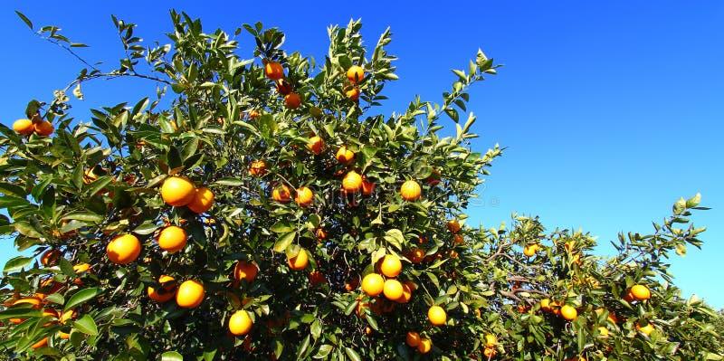 Florida orange dungelandskap royaltyfria bilder