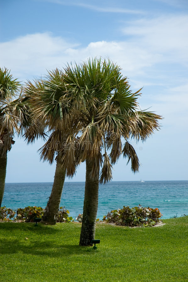 Florida-Palme stockfoto