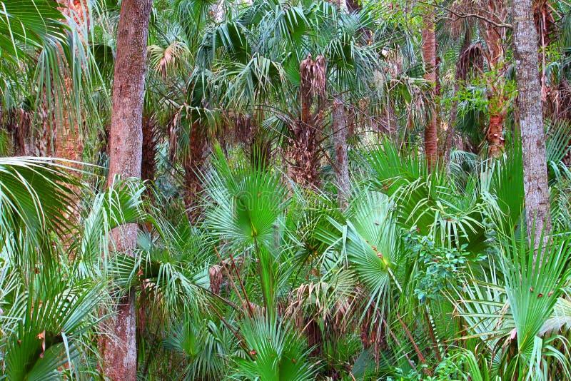 Florida Palmetto Landscape royalty free stock photography