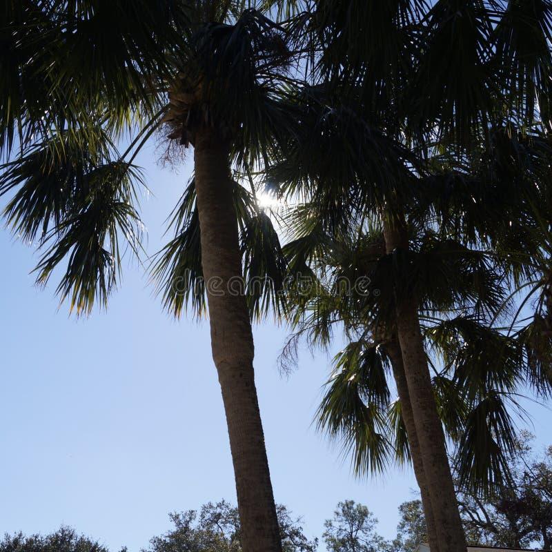 Florida palmträd arkivbilder