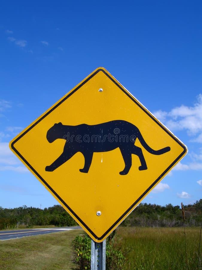 Florida Panther Crossing stock photo