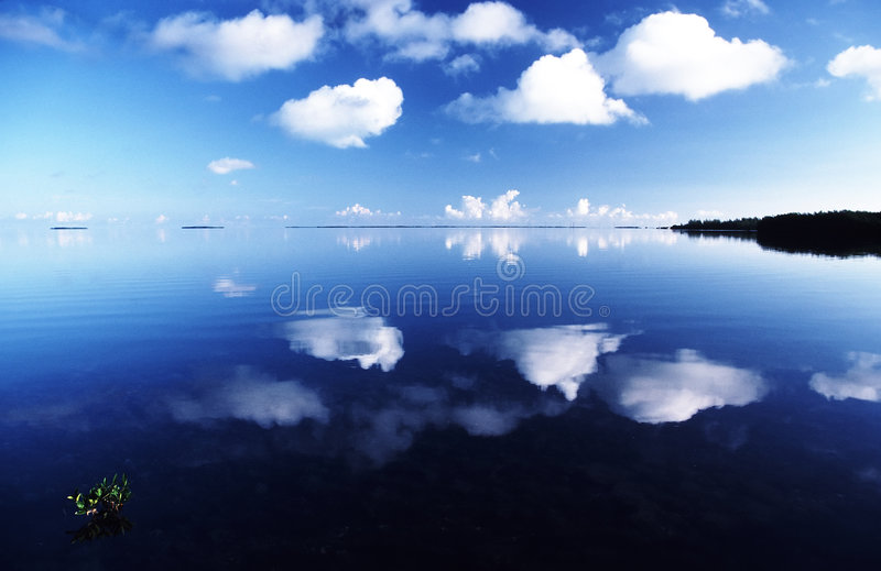 Florida Reflections 2 royalty free stock images