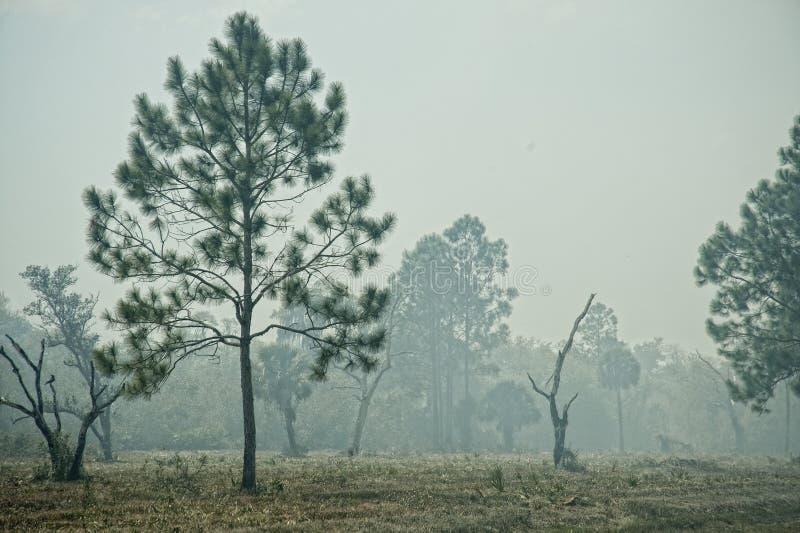 Florida sörjer i rök under kontrollerad brännskada arkivbild