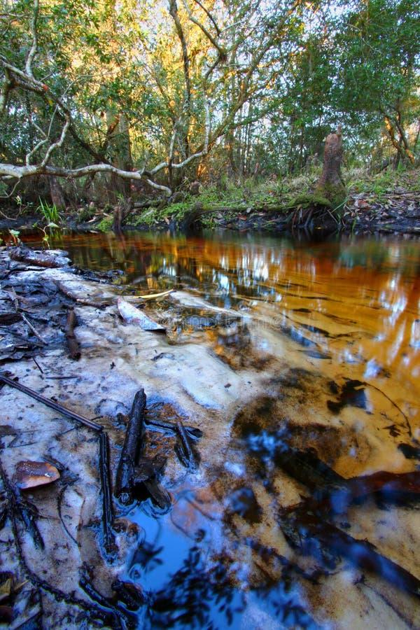 Florida Sandy Creek Landscape fotos de stock