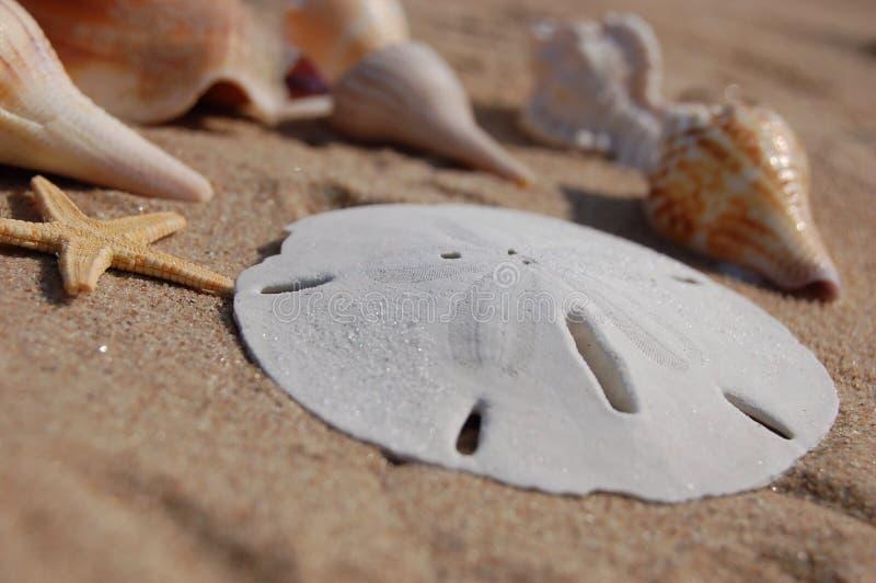 Florida sea shells royalty free stock photos