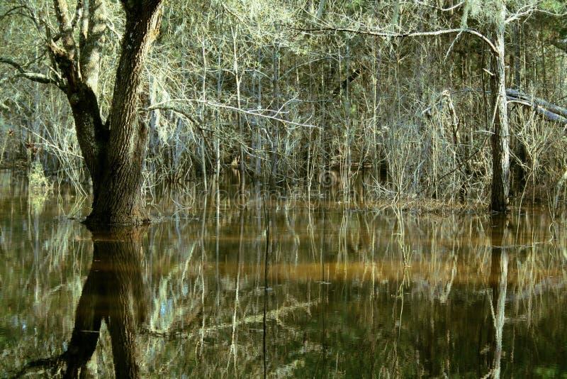 Florida skogflod fotografering för bildbyråer