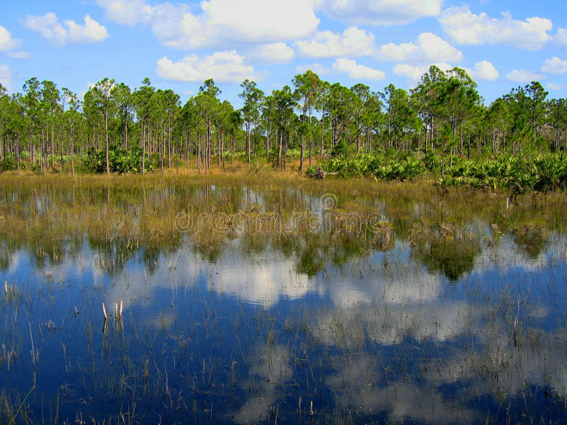Florida slinga royaltyfria foton