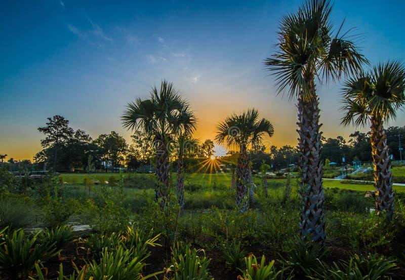 Florida soluppgång över palmträd royaltyfri fotografi