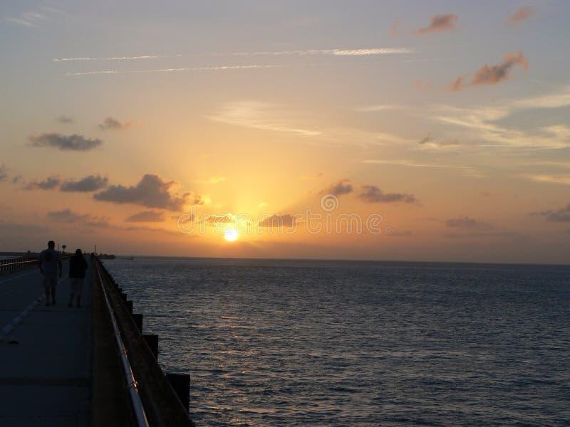 Florida stämm soluppgång arkivfoto