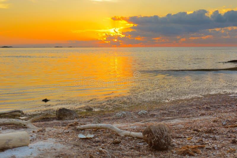 Florida stämm soluppgång royaltyfri foto