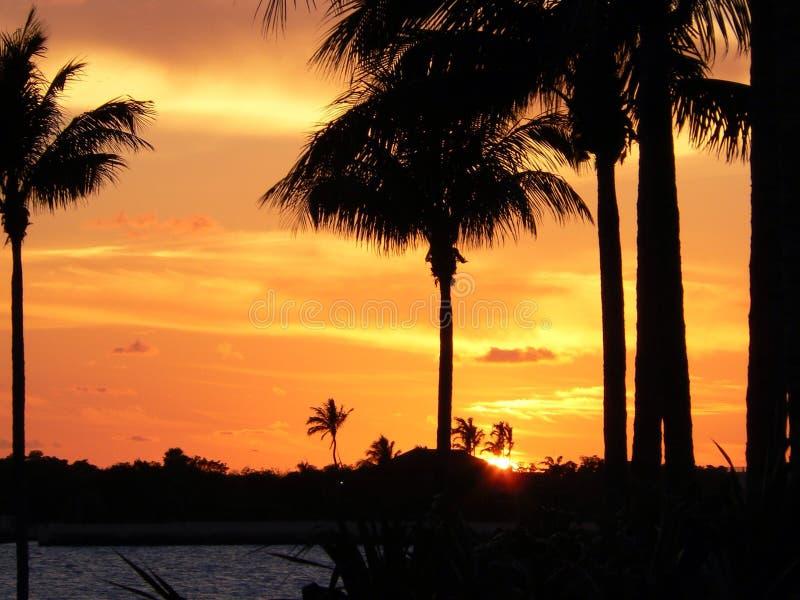 Florida stämmer solnedgång 1 arkivfoton