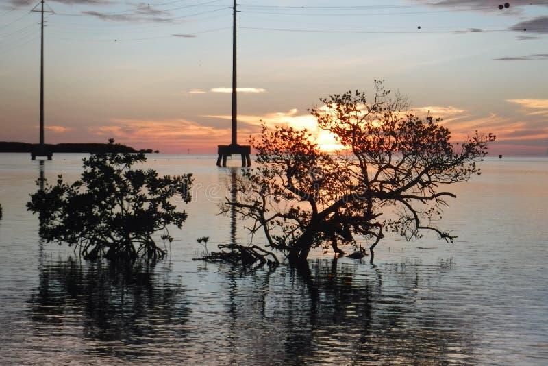 Florida stämmer solnedgångIslamorada mangrovar arkivfoto
