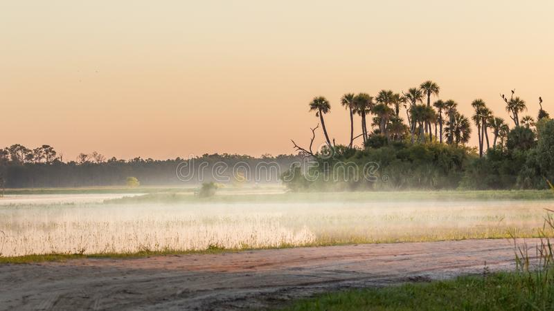 Florida-Sumpf und -sumpf bei Sonnenaufgang mit Nebel, Orlando Wetlands lizenzfreies stockfoto
