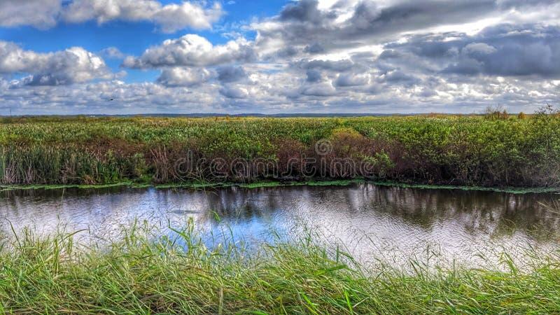 Florida-Sumpf unter blauem Himmel stockfoto