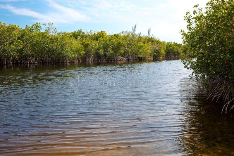 Florida-Sumpfgebiet, Airboatfahrt am Everglades-Nationalpark in USA lizenzfreie stockfotografie
