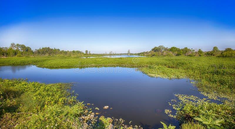 Florida-Sumpfgebiete lizenzfreie stockfotos