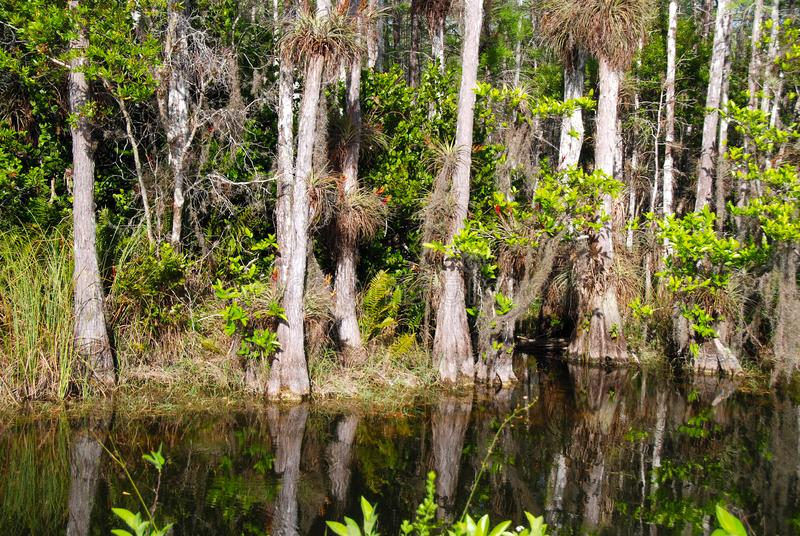 Florida-Sumpfgebiete stockfotografie
