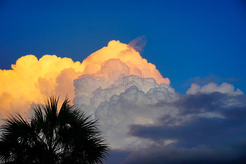 Florida sun set cloud. Florida sunset cloud and palm tree, taken in Tampa, florida stock photography